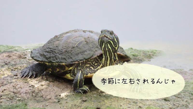 【季節】による臭いの違いや対処法