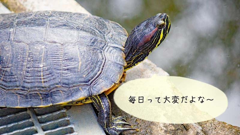 亀の日常的にできる臭いケア