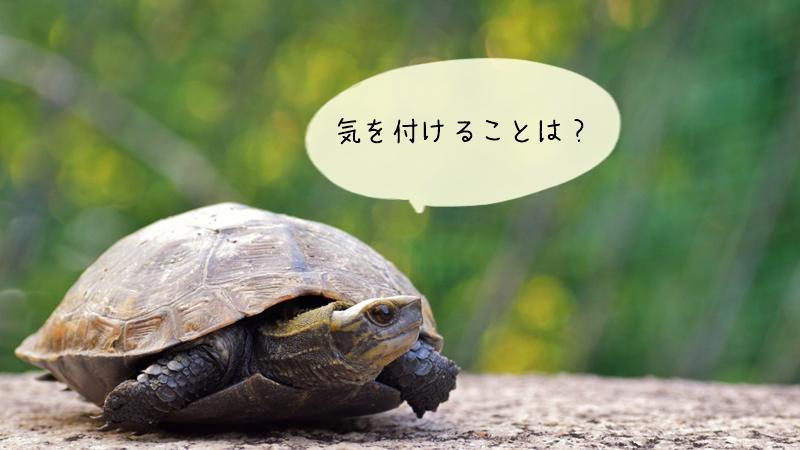 亀の臭い対策の注意点